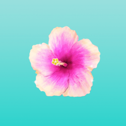 Mint background pink flower +100 Iphone