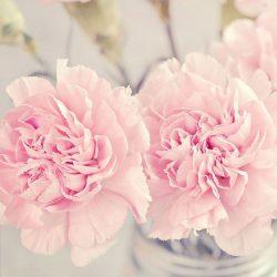 5 Cute Pink Peonies iPhone Wallpapers | Preppy Wallpapers +100 Iphone