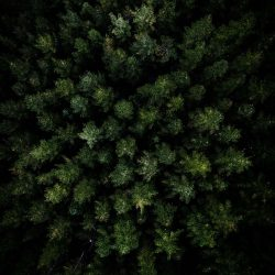 Dark Forest Aerial View iPhone Wallpaper | +100 Iphone
